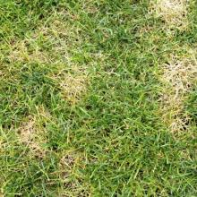 Patchy grass